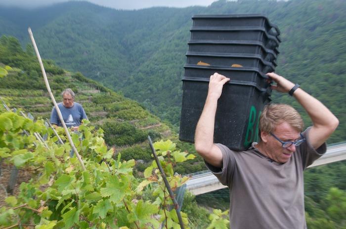 vino sciacchetra cinque terre (3)